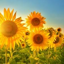 albuquerque florist aspire floral 102 photos floral designers 1416 juan tabo