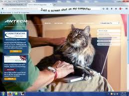feline infectious peritonitis fip in your cat