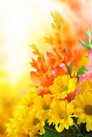 best 25 beautiful flowers pictures ideas on pinterest pretty
