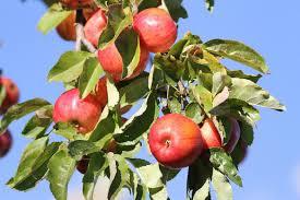 jo u0027s morning walk apple harvest time at lake cuyamaca part 1