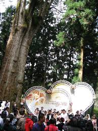 Tree Event Wow Taiwan In Alishan Wedding The Sacred Tree Icrt