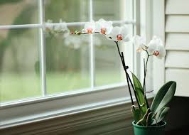 Beautiful House Plants by Houseplants Getting Started