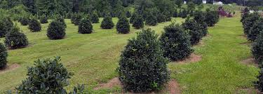 all trees and shrubs nurseries maryland wholesale grower of shade