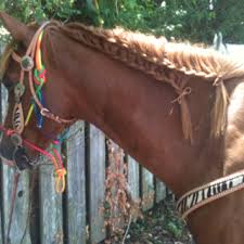 hairstyles for horses cute horse mane braid hair pinterest horse mane braids