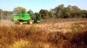 black oil sunflower seed harvesting at duke farms 2013 youtube