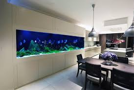 transform the way your home looks using a fish tank discus