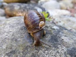 jeremy the lefty snail has now been rejected by two other lefty