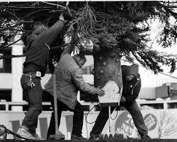 nova scotians learn the christmas tree for boston is far from free