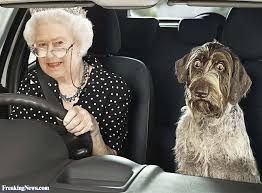 queen elizabeth dog queen elizabeth driving with a dog pictures freaking news