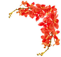 most popular flowers what do orchids symbolize find out all about orchids symbolism