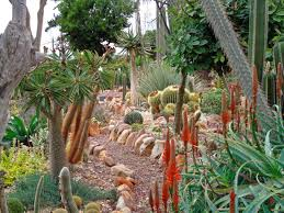 marvellous succulent garden design ideas with cream stone plant