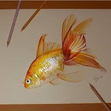 25 fish drawings ideas fish illustration