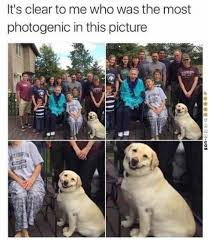Photogenic Meme - the dog is the most photogenic in this picture meme xyz