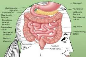 gut review our underrated digestive system and its ultimate role
