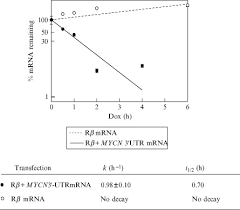 assays of adenylate uridylate rich element mediated mrna decay in