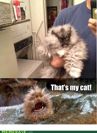 Colonel Meow Memes - memebase colonel meow know your meme