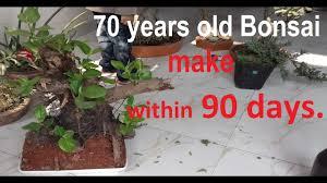 how to make a bonsai tree bonsai starter kit bonsai tree at home