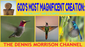 god u0027s magnificent creation the enchanting hummingbird youtube