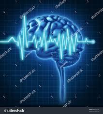 The Anatomy Of The Human Brain Human Brain Ecg Health Monitoring Electrical Stock Illustration