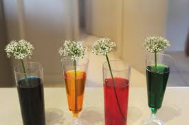flowers coloured flowers magic flowers kids science experiments