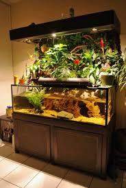 200 best vivarium aquarium u0026 terrariums images on pinterest