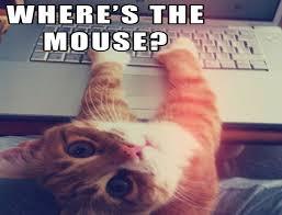 Funny Computer Meme - cat meme quote funny humor grumpy computer wallpaper 1440x1100