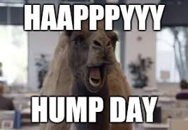 Hump Day Camel Meme - hump day camel memes imgflip