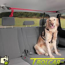 comment attacher un si e auto harnais pour attacher un chien en voiture