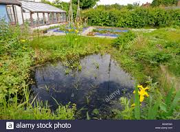 Small Urban Garden - small urban garden with wildlife pond and raised vegetable beds