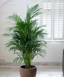 Indoor House Plants Low Light 15 Plants That Grow Without Sunlight Sunlight Plants And Gardens