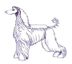 afghan hound job coloring book page afghan hound this is a drawing i create u2026 flickr