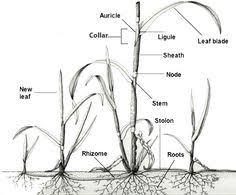 Garden Pests Identification - vegetable garden pest identification vegetable garden plants