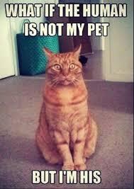 Jokes Meme - cat meme great clean jokes