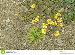yellow flowers and plants top view stock photo image 85611787