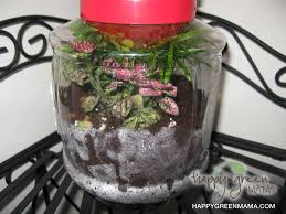 diy terrarium green crafts for kids learning about eco systems