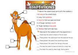 the camel animals adaptations worksheet free esl printable