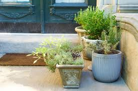 Garden Planning 101 My Mother My Brooklyn Story Creating A Townhouse Garden From Scratch In