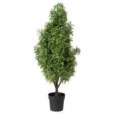 plant pots u0026 plants
