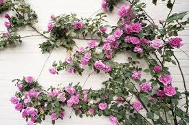 georgetown flowers georgetown
