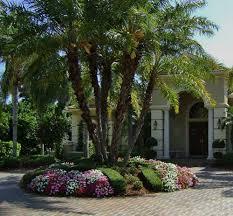 palm trees florida landscaping ideas u2014 jbeedesigns outdoor