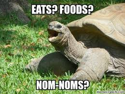 Tortoise Meme - 29 hilarious turtle memes that are so funny they re actually dangerous