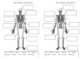 The Human Body Picture The Skeleton And Muscles Powerpoint And Worksheets By Hilly577