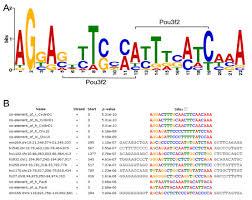 Meme Motif - prediction of transcriptional regulatory networks for retinal