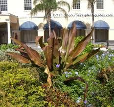 Tropical Rainforest Plant Species List - types of tropical rainforest plants exotic garden plant list