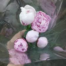 Bulk Wedding Flowers Bulk Discount Flowers Buying Peonies For Weddings