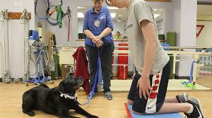 Teen learns to walk again with help from dogs with disabilities