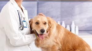 queen s dogs best veterinarian in queens new york break throughs