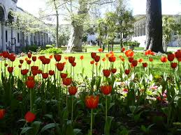 Ottoman Tulip by Regency Tales Ottoman Mansions Tulip Fever And Caiques