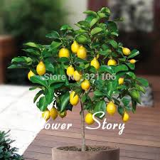 Gift Tree Free Shipping 8 Kinds Bonsai Tree Seeds 240 Seeds Perfect Diy Home Garden