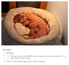 Dog In Bed Meme - that s a weird looking dog but he s still a cute dog dogs know